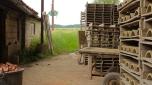 Séchage des tuiles sur les clayettes